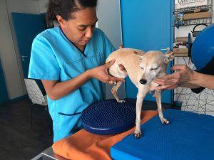 Suite physiologie chien